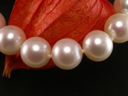 Perlenkette höchster Qualität,8,4-9,4mm, Goldschließe